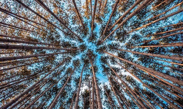 Wachstum Wald scale