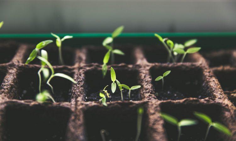 Holtzbrinck Ventures Seed-Programm
