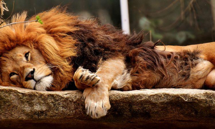 """Zwei Drittel der von Bitkom befragten Gründer möchten nicht in """"Die Höhle der Löwen""""."""