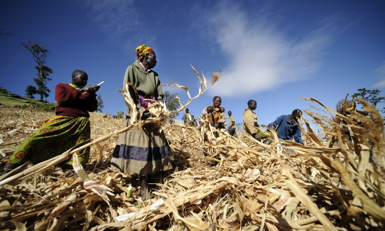 WFP_Innovation_Post-Harvest_Losses