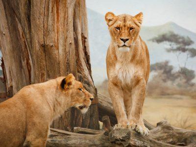 LaMonachia 2020 Die Höhle der Löwen